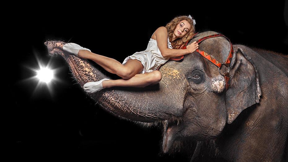 Полсотни артистов и 40 животных покажут в Воронежском цирке спектакль «Девочка и слон»