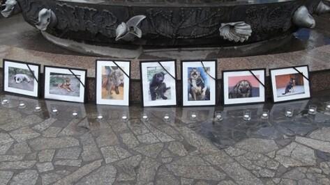 Завтра в Воронеже зоозащитники будут собирать подписи против убийства бездомных собак