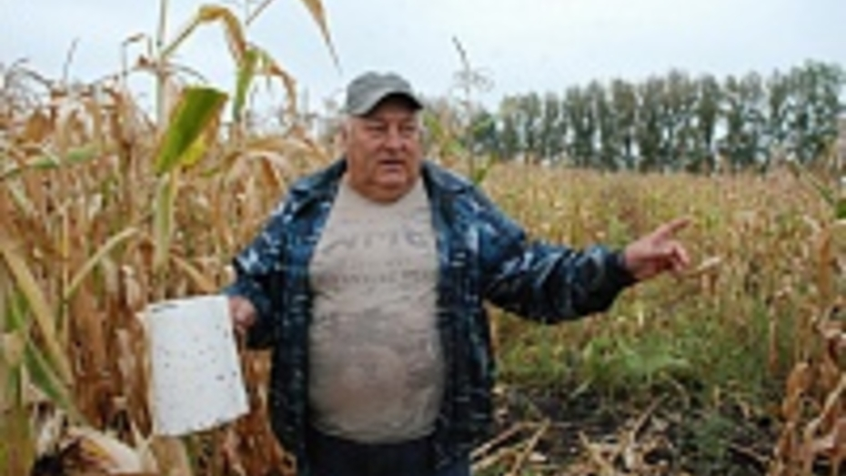 Кантемировцы открыли охоту на жуков-вредителей вблизи границы с Украиной
