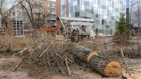 В Воронеже начали вырубку «пылящих» тополей