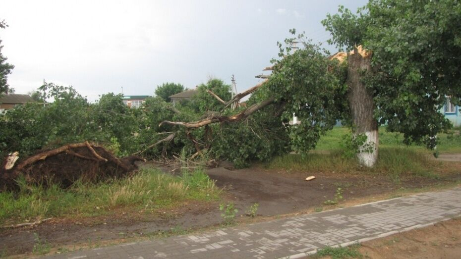 Спасатели предупредили о сильном ветре в Воронежской области ночью и днем 13 июля