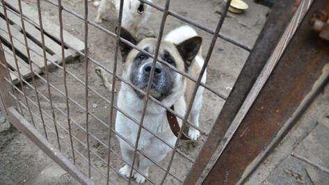 Приют для бездомных животных появится в Воронеже в 2021 году