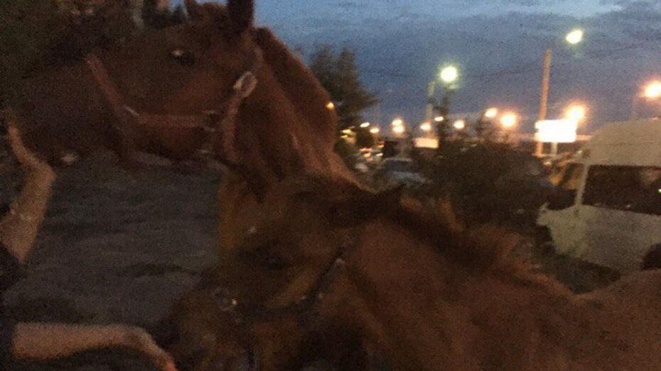 Воронежцы вызвали полицию из-за гулявших по городу лошадей