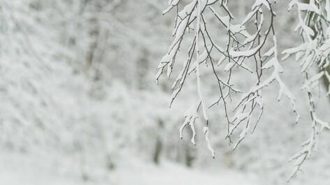 Аномальное тепло в конце новогодних каникул в Воронеже сменится морозами