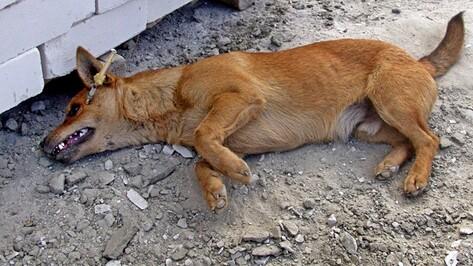 Воронежский приют для бездомных собак готовится обороняться от догхантеров