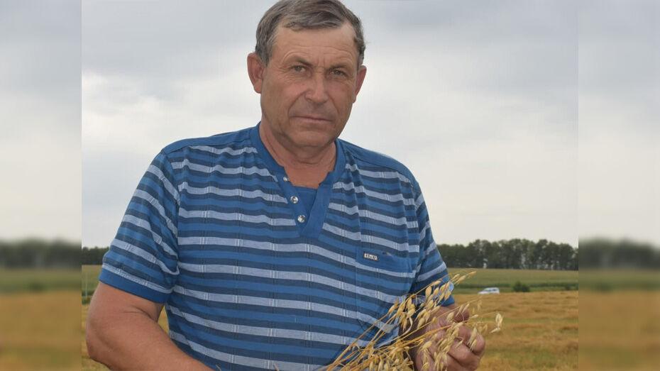 В Грибановском районе фермер собрал рекордный урожай овса