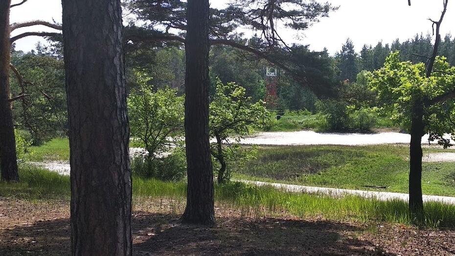 Полностью пересохло озеро в Воронежском заповеднике