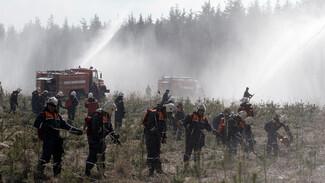 В Воронежской области создали дополнительные лесопатрульные службы