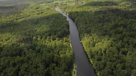Площадь зеленого пояса вокруг Воронежа составит 4,3 тыс га