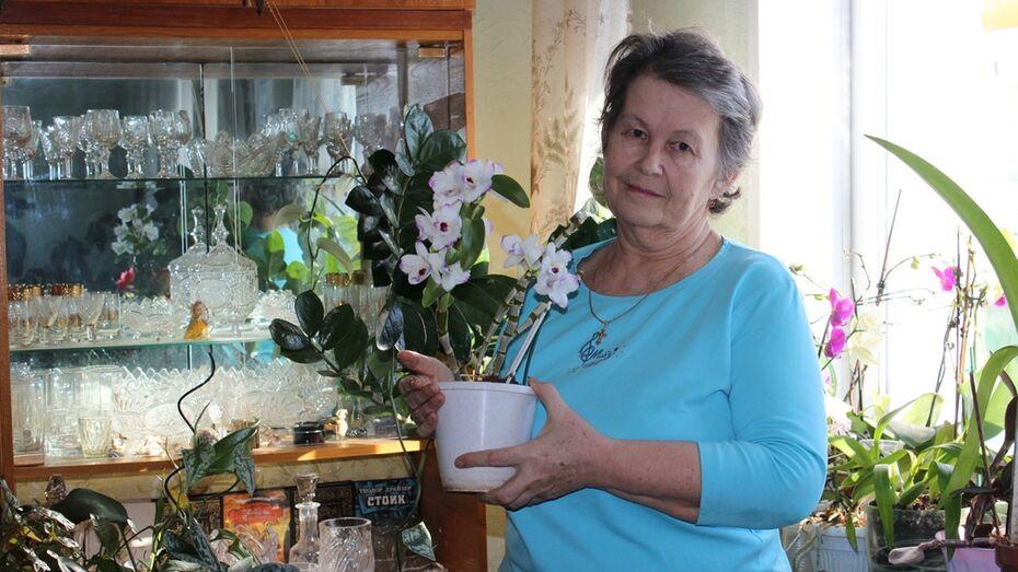 Таловчанка вырастила дома 300 комнатных растений