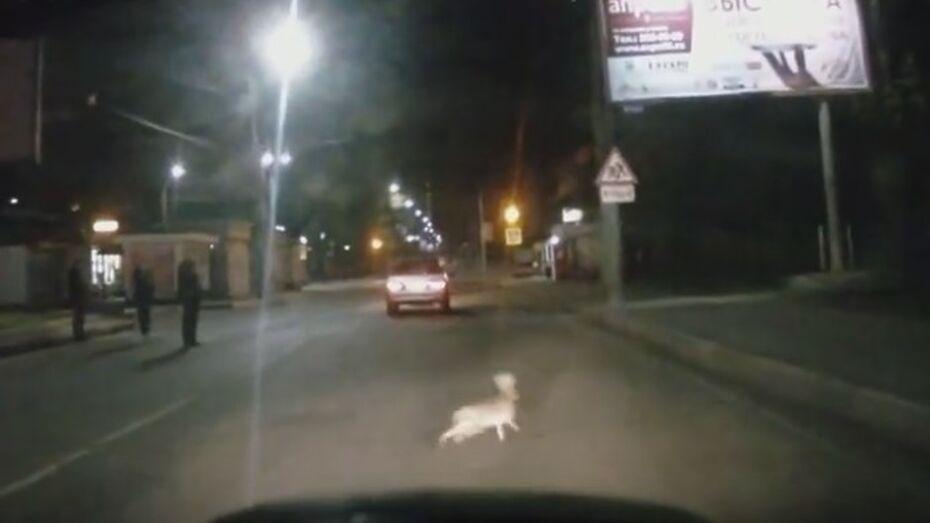 Заяц выжил после ДТП в Воронеже