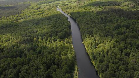 Границы зеленого пояса в Воронеже установят за 3 млн рублей