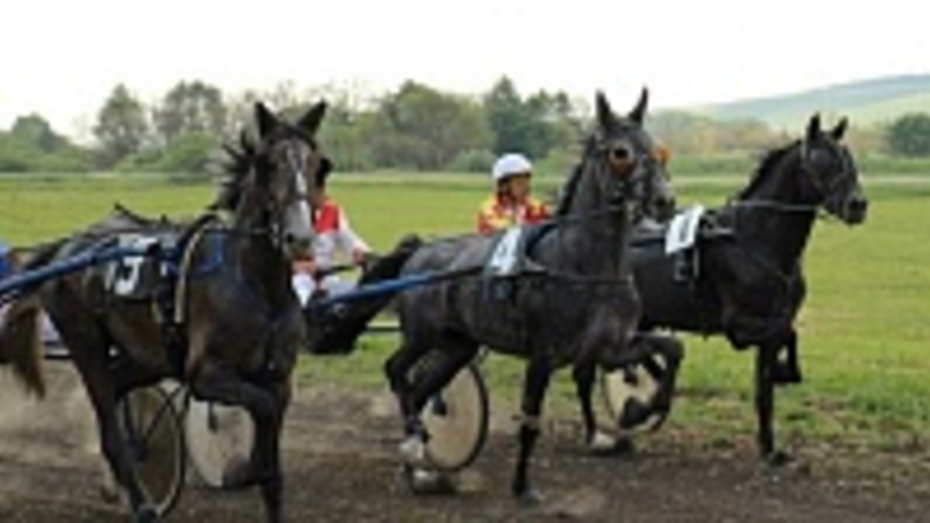 В Каширском районе состоялся первый конно-спортивный праздник