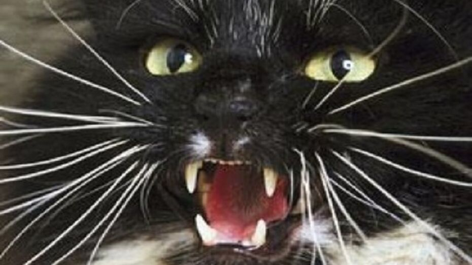 В Подгоренском районе домашний кот набросился на хозяина