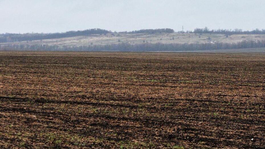Немецких инвесторов намерена привлечь в сельское хозяйство Воронежская область