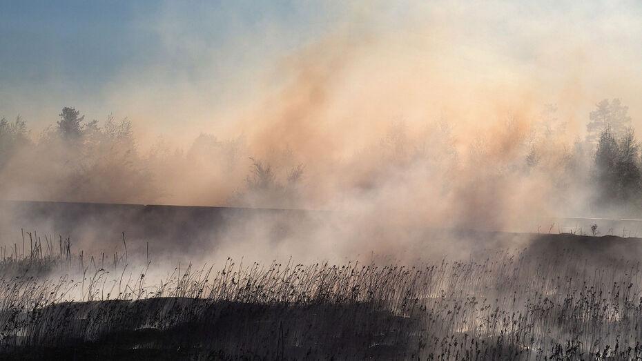 В небо над Воронежем поднялся столб дыма от горящей травы