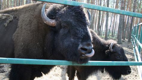 На окраине Воронежа торжественно откроют зоопитомник «Червленый Яр»