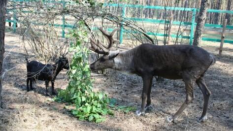 Зоопитомник «Червленый Яр» пригласил воронежцев на открытие сезона