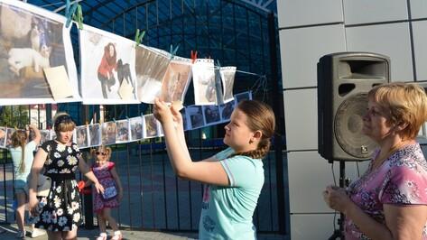 В Россоши провели фотовыставку для помощи бездомным животным