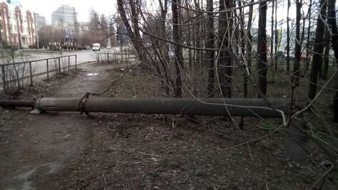Воронежцы опубликовали фотографии поваленных столбов и деревьев после урагана