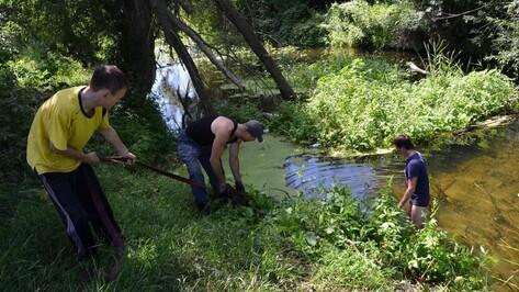 Россошанские волонтеры расчистили от веток и мусора Черную Калитву