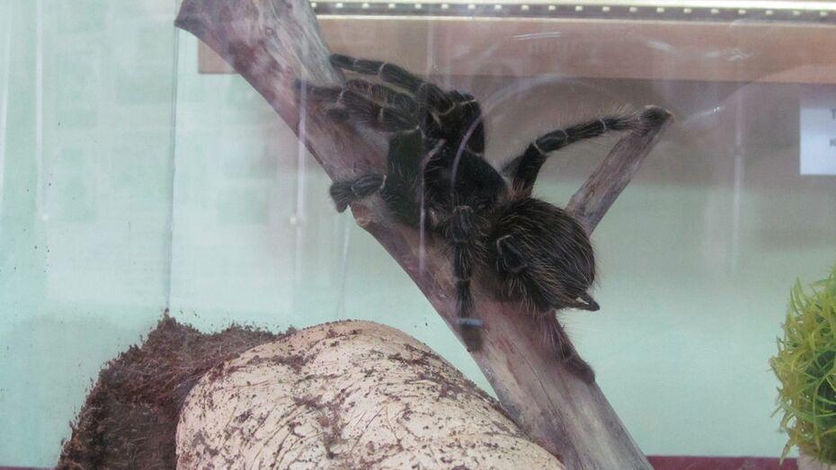 В Боброве открылась выставка частной коллекции экзотических пауков