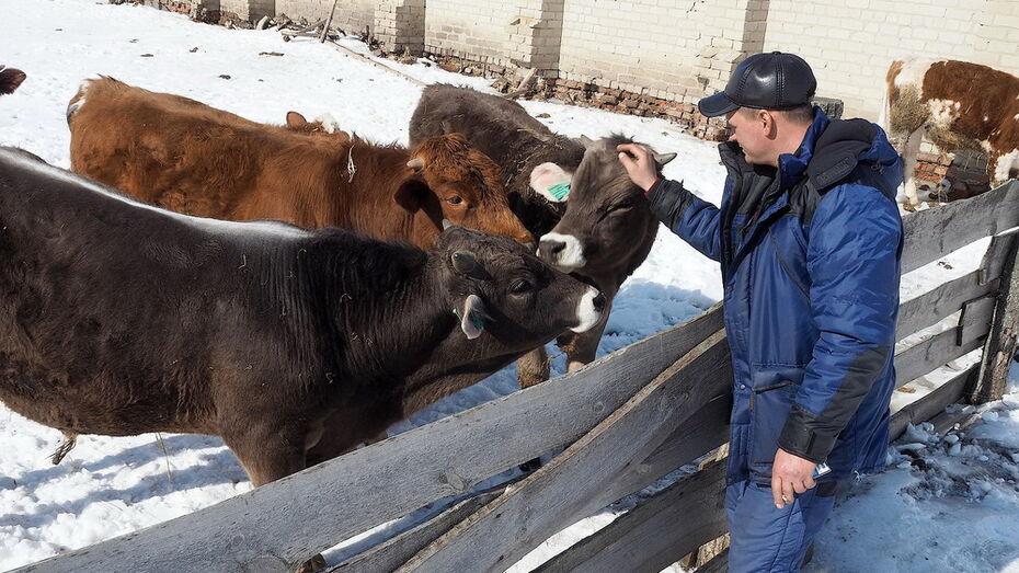 Средняя зарплата на сельхозпредприятиях Лискинского района достигла 39 тыс рублей