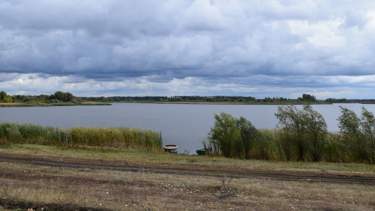 Нетихий омут. Как жители Воронежской области не отдали федеральный пруд под рыбхоз