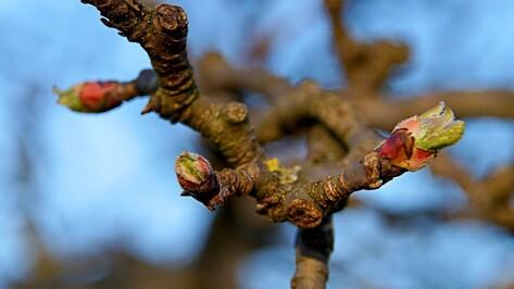Активисты пригласили воронежцев на уборку яблоневого сада
