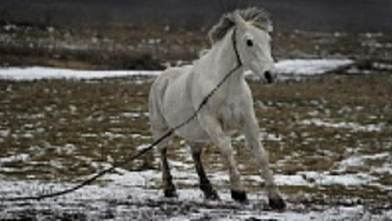 Двадцатилетняя кобыла Майка переженила часть Нижнедевицкого района