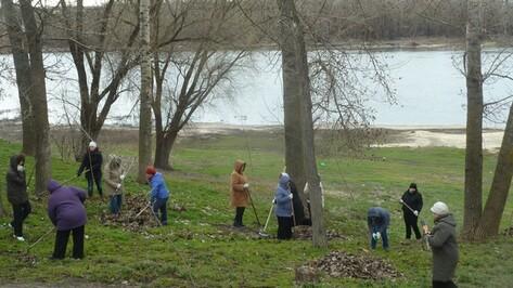 В Верхнемамонском районе во время субботника посадили больше тысячи деревьев