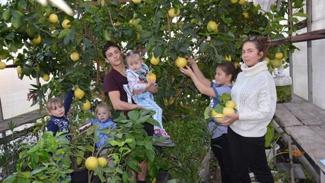 Поворинская многодетная семья выращивает в зимнем саду экзотические фрукты