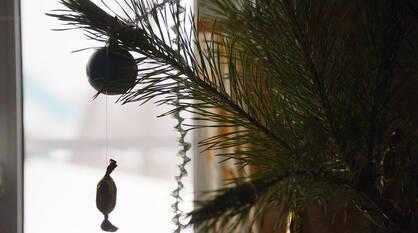 Более 1,5 тыс новогодних елок переработали в щепки в Воронеже