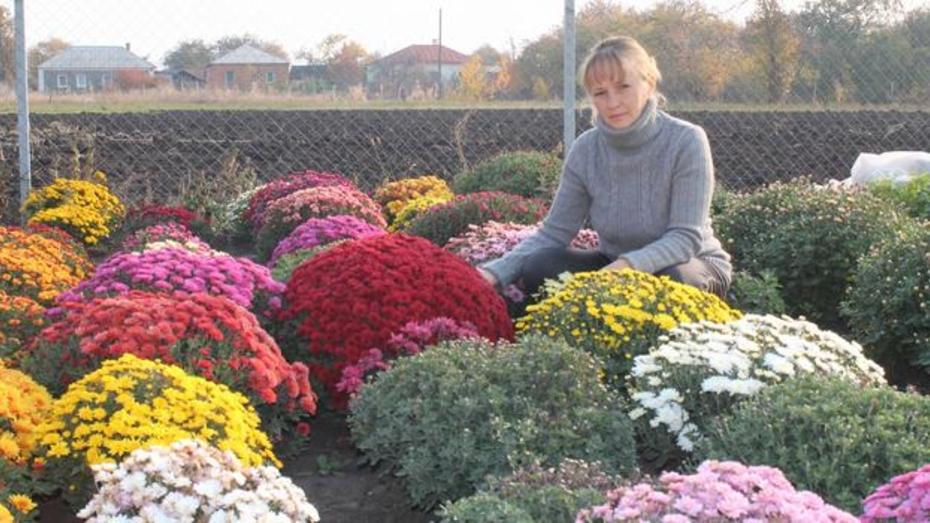 Жительница Хохольского района выращивает на своем огороде около 400 сортов хризантем