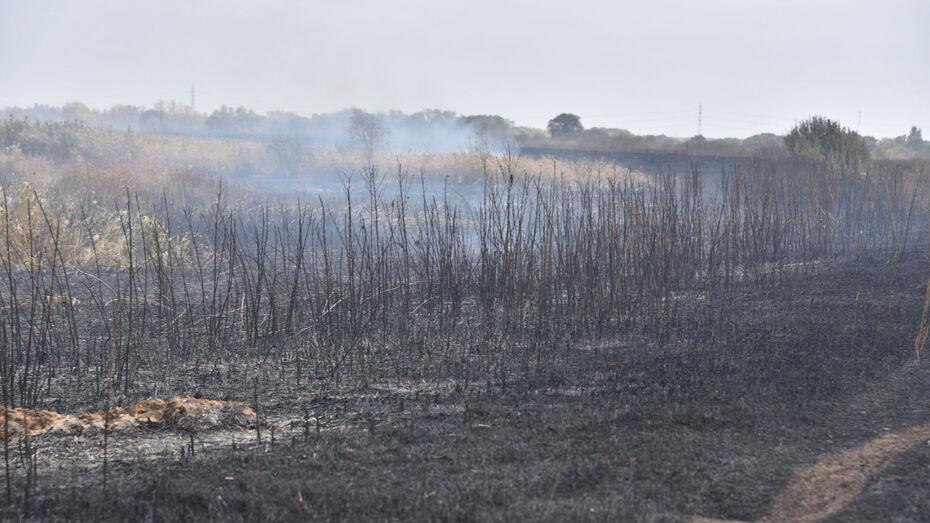 На борьбу с мощным пожаром в отдаленном районе Воронежской области прибыл спецпоезд