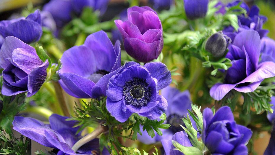 Весенний парад цветов пройдет в ботаническом саду Воронежского госуниверситета
