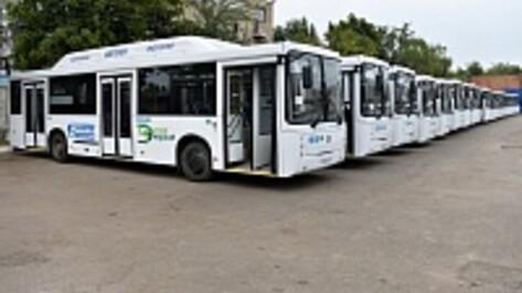 В Воронеже на «Народный маршрут» выйдут 25 новых автобусов