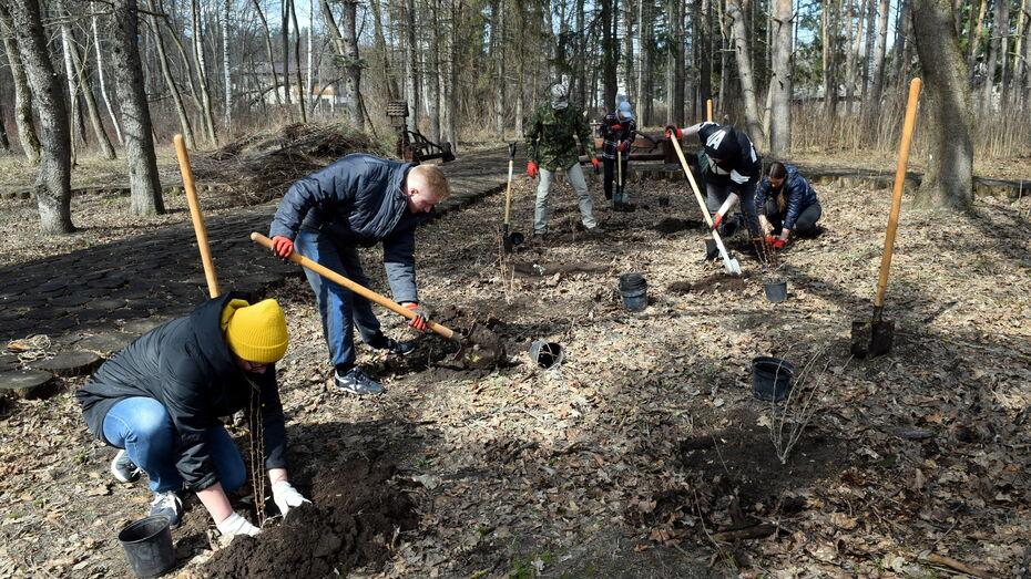 Волонтеры помогли с восстановлением дендропарка Воронежского заповедника