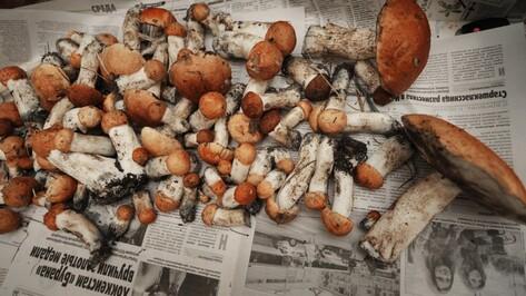 В Воронежской области пропали 2 грибника-пенсионера