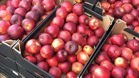 Россельхознадзор уничтожил 273 кг польских яблок в Воронежской области