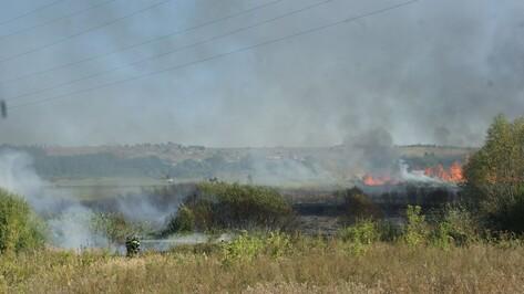 В Воробьевке загорелись камыш и трава