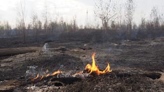 Чрезвычайная пожароопасность установилась почти по всей Воронежской области
