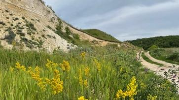 В воронежских Костенках появился 15-километровый экскурсионный веломаршрут