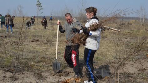 В Новоусманском районе в рамках акции «Лес Победы» высадили 12 тыс берез