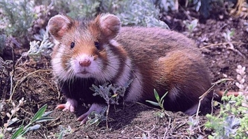 Ученые порекомендовали внести 39 животных в Красную книгу Воронежской области