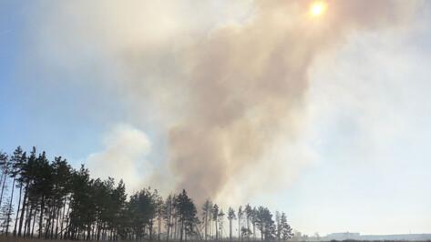 Спасатели предупредили воронежцев о возможном всплеске природных пожаров 12 июня