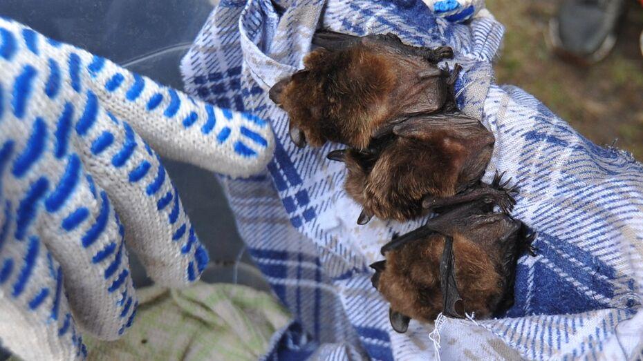 В Воронеже волонтеры соберут деньги на холодильник для летучих мышей