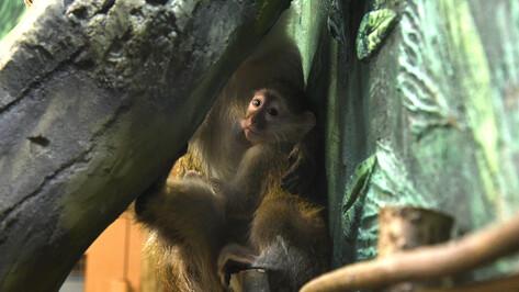 Название нового зала зоопарка выберут читатели РИА «Воронеж»
