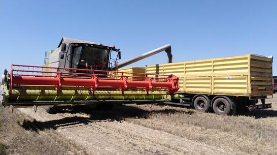 Борисоглебские аграрии получили рекордный урожай зерновых за последние 30 лет