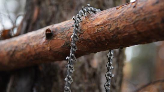 Житель Воронежской области продал за 50 тыс рублей лес ценой в 4 млн